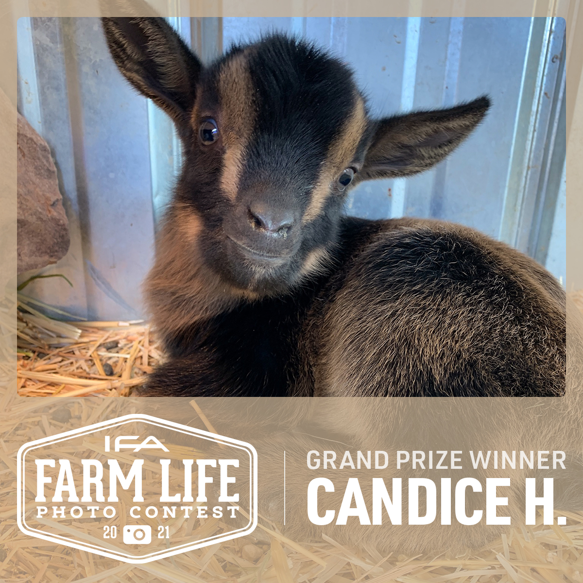 IFA_FarmLife21_GrandPrize_Winner